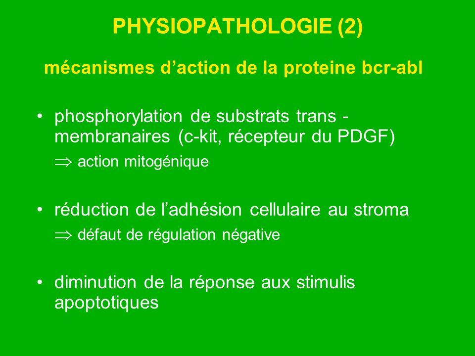 PHYSIOPATHOLOGIE (2) mécanismes daction de la proteine bcr-abl phosphorylation de substrats trans - membranaires (c-kit, récepteur du PDGF) action mit