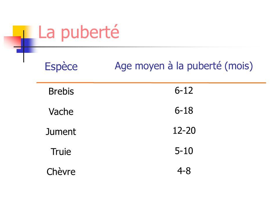 La puberté Espèce Brebis Vache Jument Truie Chèvre Age moyen à la puberté (mois) 6-12 6-18 12-20 5-10 4-8
