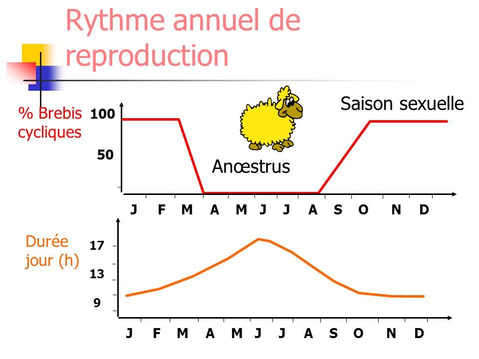 % Brebis cycliques Durée jour (h) 100 50 17 13 9 JFMAMJJASOND JFMAMJJASOND Anœstrus Saison sexuelle Rythme annuel de reproduction