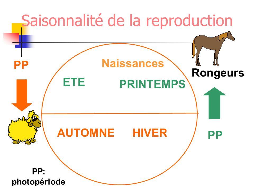 ETE PRINTEMPS HIVERAUTOMNE Naissances Rongeurs PP PP: photopériode Saisonnalité de la reproduction