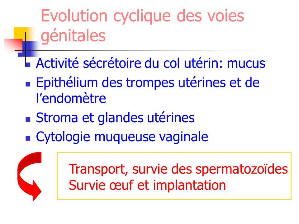Evolution cyclique des voies génitales Activité sécrétoire du col utérin: mucus Epithélium des trompes utérines et de lendomètre Stroma et glandes uté