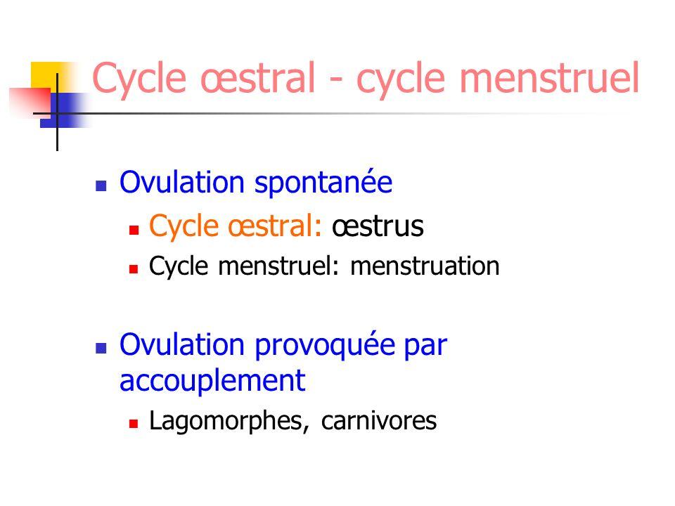 Cycle oestral Proœstrus 9j (3-17j) Ecoulement vulvaire sérosanguin (diapédèse des érythrocytes) Muqueuse vaginale lisse (œdème) Oestrus 9 j (3-21j) Réceptivité Frottis vaginal riche en cellules kératinisées Epithélium vaginal crénelé (déshydratation) Ovulation: 24-48h après pic LH (durée 24h)