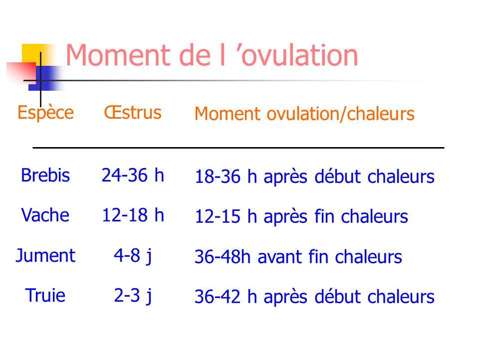Moment de l ovulation Espèce Brebis Vache Jument Truie Œstrus 24-36 h 12-18 h 4-8 j 2-3 j Moment ovulation/chaleurs 18-36 h après début chaleurs 12-15