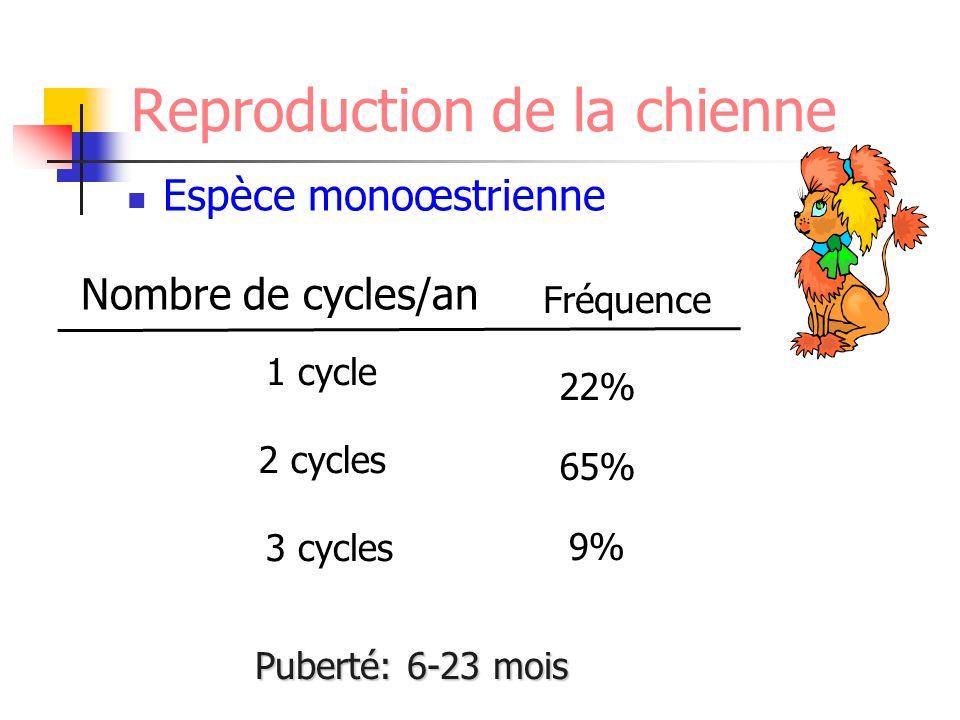 1 cycle 2 cycles 3 cycles Nombre de cycles/an 22% 65% 9% Fréquence Reproduction de la chienne Espèce monoœstrienne Puberté: 6-23 mois