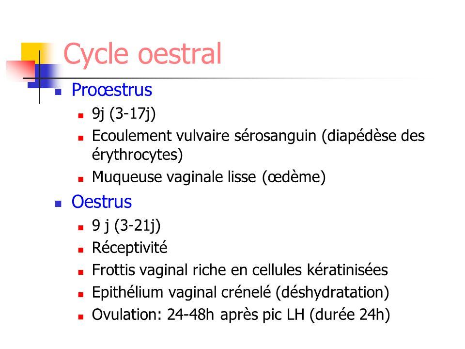 Cycle oestral Proœstrus 9j (3-17j) Ecoulement vulvaire sérosanguin (diapédèse des érythrocytes) Muqueuse vaginale lisse (œdème) Oestrus 9 j (3-21j) Ré