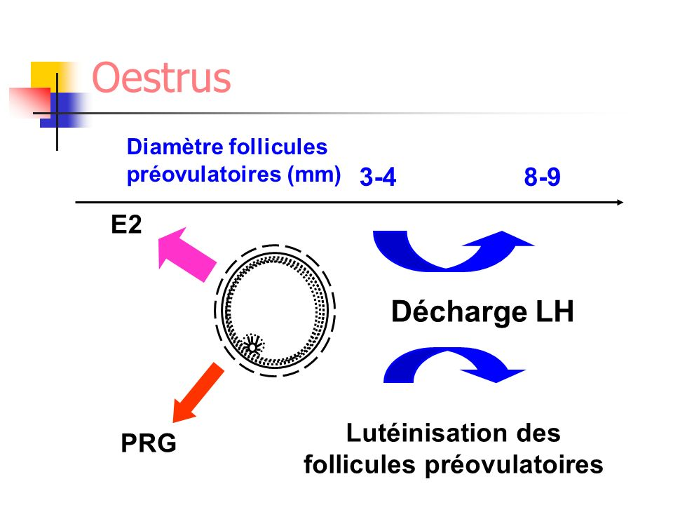 Décharge LH Diamètre follicules préovulatoires (mm) 3-48-9 Lutéinisation des follicules préovulatoires PRG E2 Oestrus