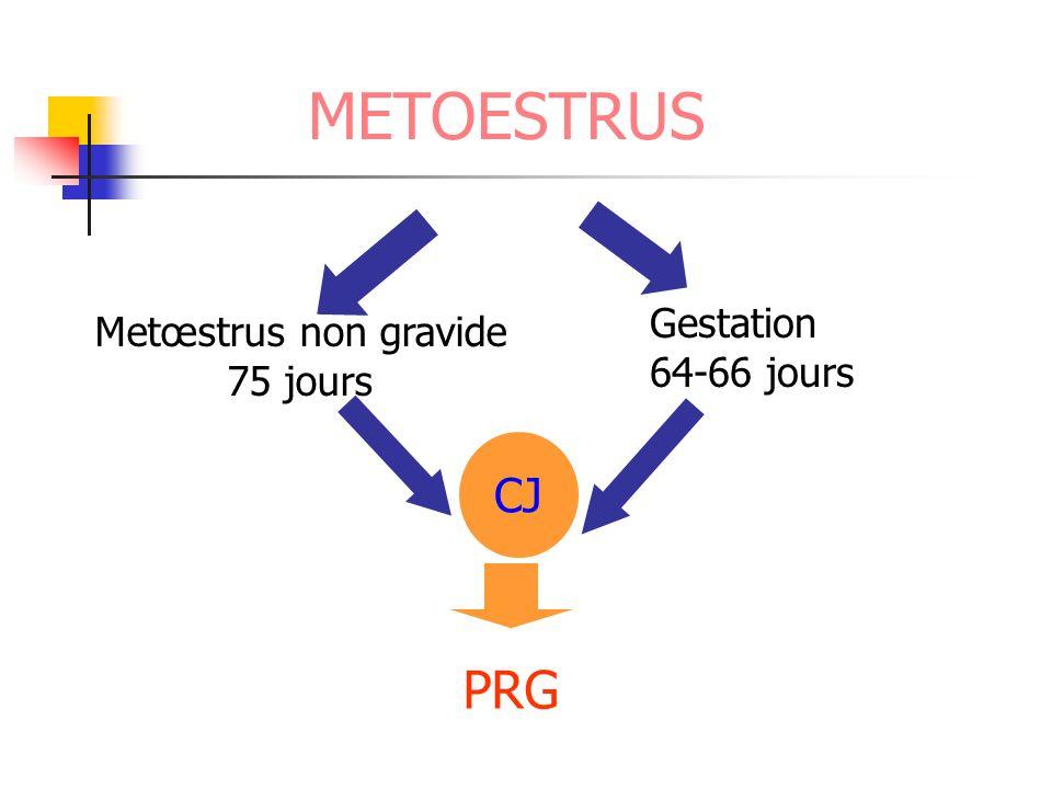 METOESTRUS Metœstrus non gravide 75 jours Gestation 64-66 jours CJ PRG