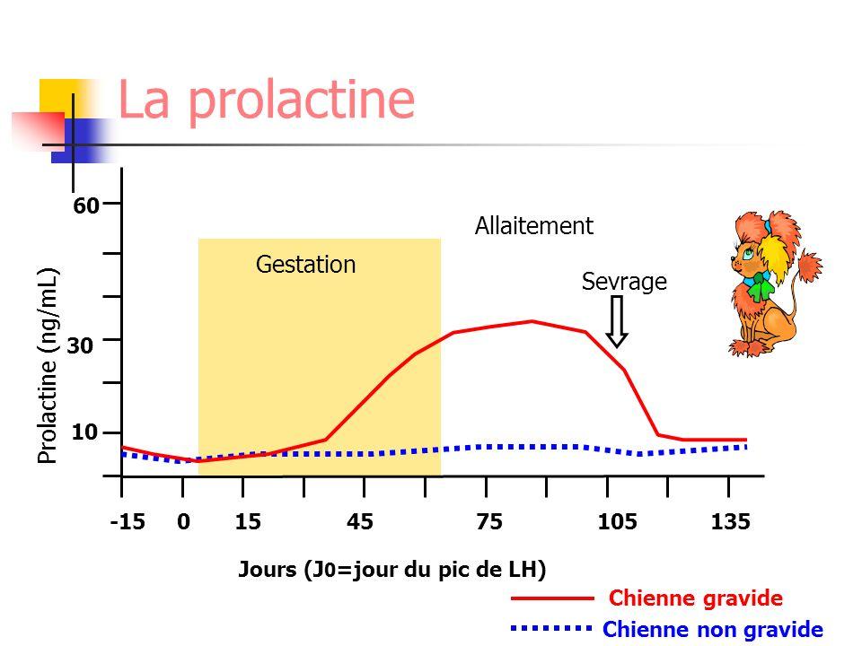 -150154575105135 Jours (J 0 =jour du pic de LH) Prolactine (ng/mL) 10 30 60 Chienne gravide Chienne non gravide Gestation Sevrage Allaitement La prola