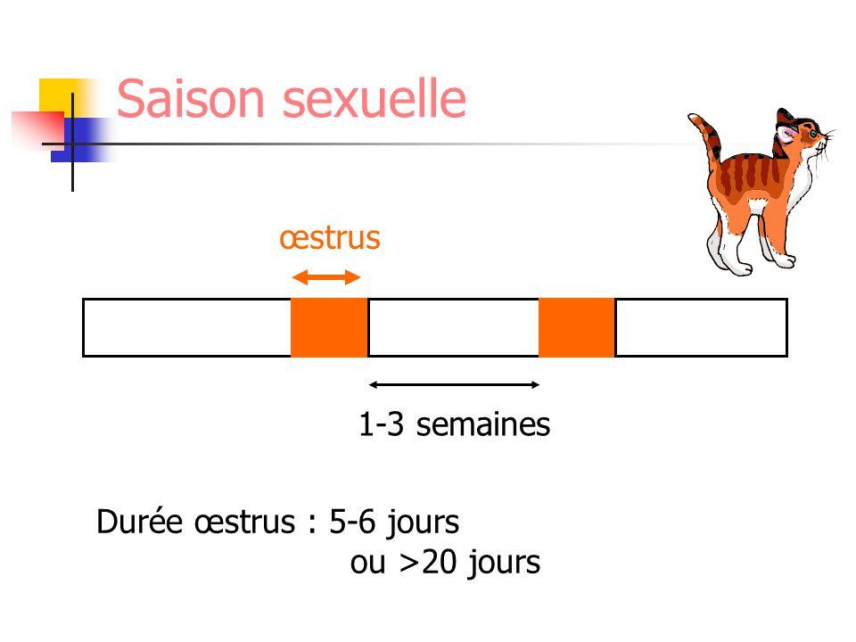 Saison sexuelle œstrus 1-3 semaines Durée œstrus : 5-6 jours ou >20 jours