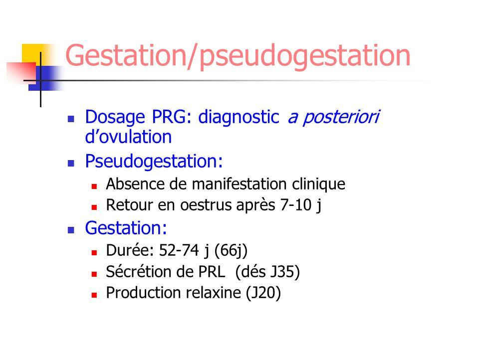 Gestation/pseudogestation Dosage PRG: diagnostic a posteriori dovulation Pseudogestation: Absence de manifestation clinique Retour en oestrus après 7-