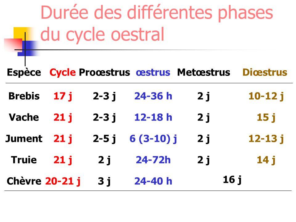 Espèce Brebis Vache Jument Truie Chèvre Cycle 17 j 21 j 20-21 j Proœstrus 2-3 j 2-5 j 2 j 3 j œstrus 24-36 h 12-18 h 6 (3-10) j 24-72h 24-40 h Metœstr