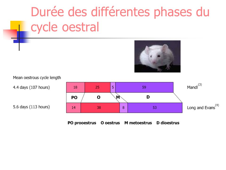 Evolution des cycles Début des cycles Puberté Ménopause Primates Interruption des cycles (anœstrus) Gestation Anœstrus post-partum, anœstrus de lactation Rôle des facteurs nutritionnels