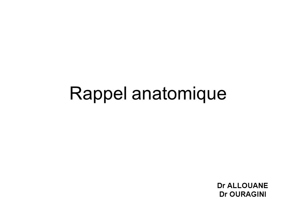 Rappel anatomique Dr ALLOUANE Dr OURAGINI