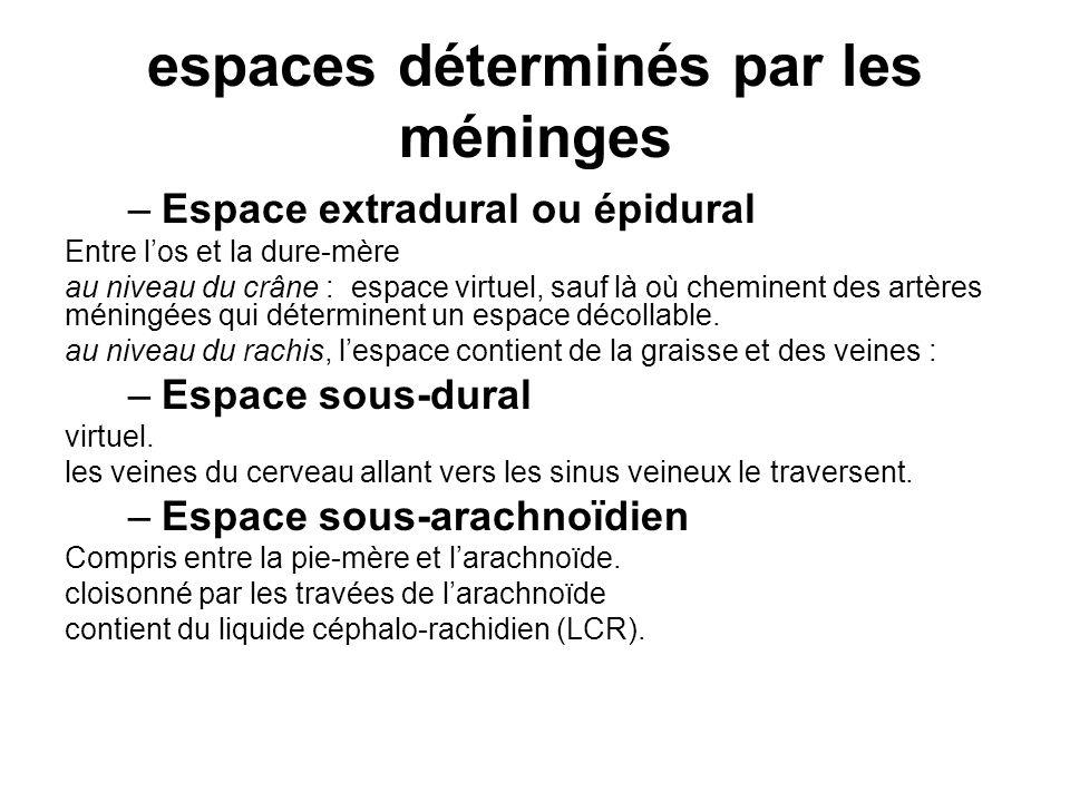 espaces déterminés par les méninges –Espace extradural ou épidural Entre los et la dure-mère au niveau du crâne : espace virtuel, sauf là où cheminent