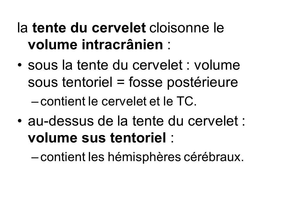 la tente du cervelet cloisonne le volume intracrânien : sous la tente du cervelet : volume sous tentoriel = fosse postérieure –contient le cervelet et