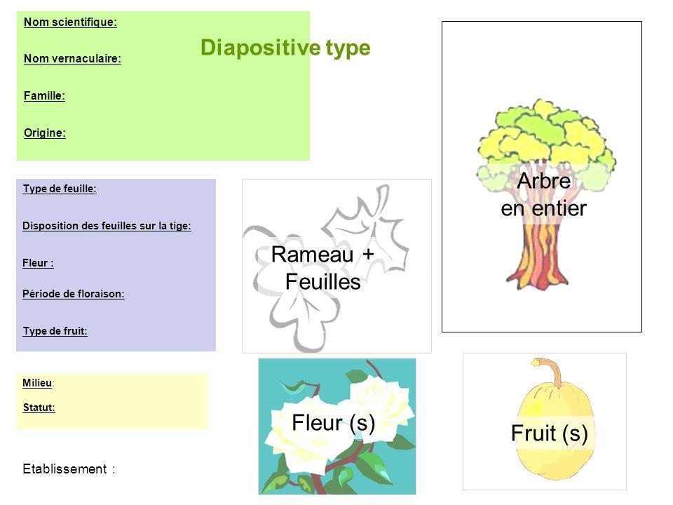 Etablissement : Nom scientifique: Nom vernaculaire: Famille: Origine: Type de feuille: Disposition des feuilles sur la tige: Fleur : Période de florai