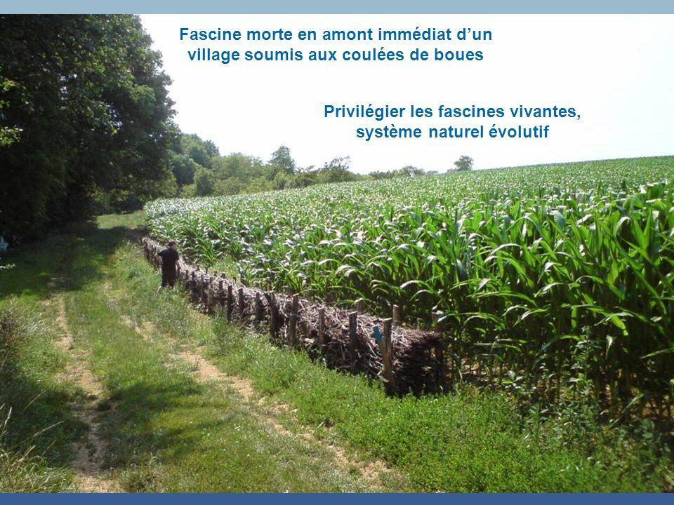 Fascine morte en amont immédiat dun village soumis aux coulées de boues Privilégier les fascines vivantes, système naturel évolutif