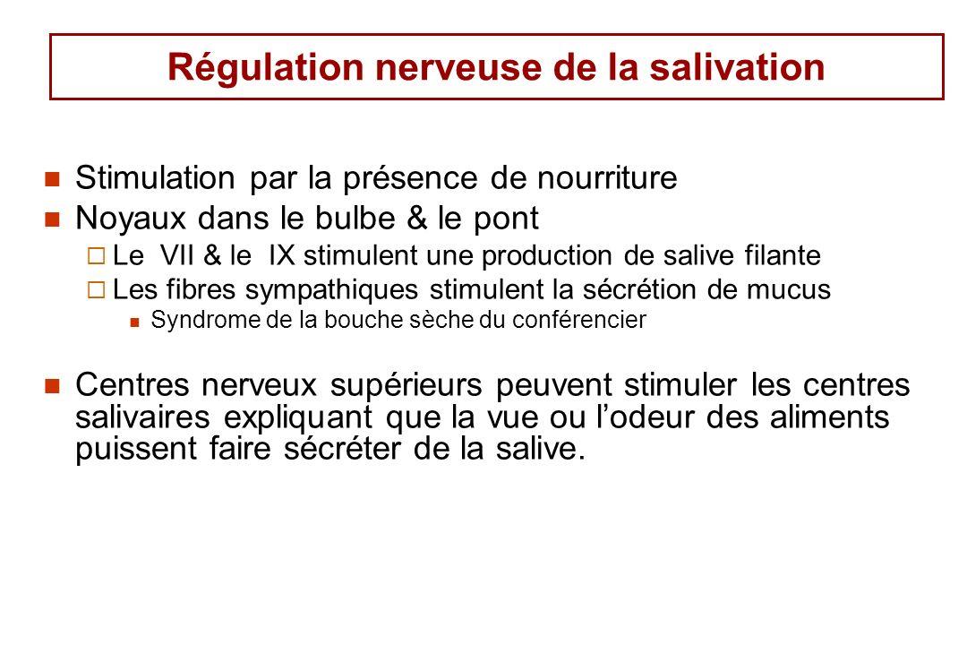 Régulation nerveuse de la salivation Stimulation par la présence de nourriture Noyaux dans le bulbe & le pont Le VII & le IX stimulent une production