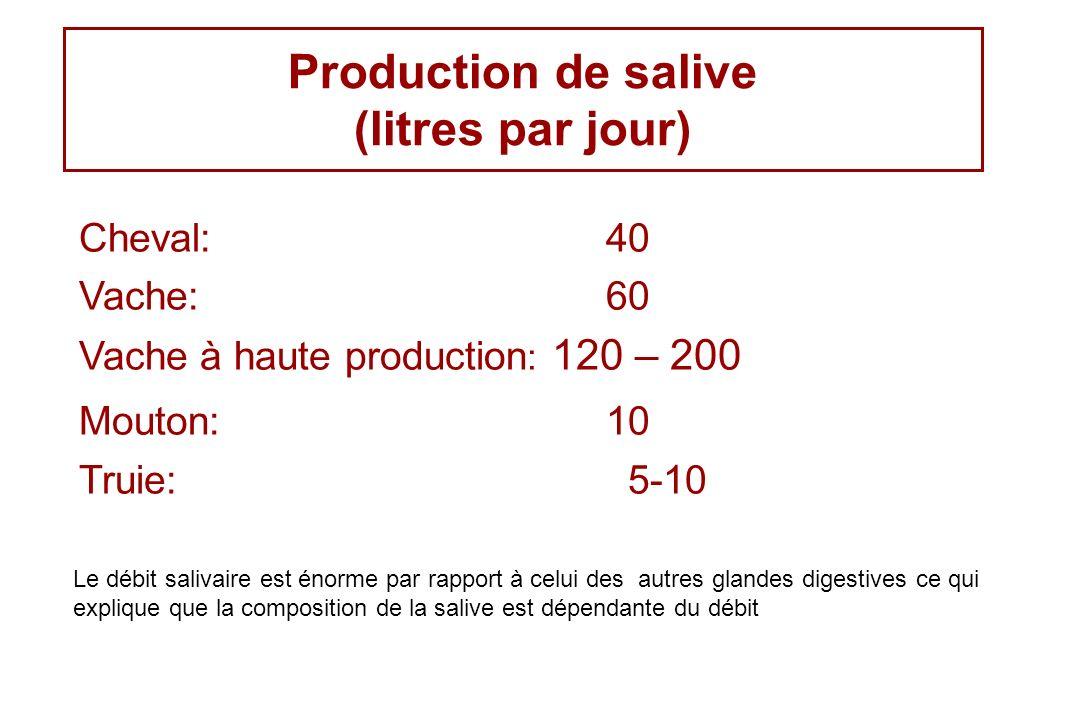 Production de salive (litres par jour) Cheval: 40 Vache:60 Vache à haute production : 120 – 200 Mouton: 10 Truie: 5-10 Le débit salivaire est énorme p