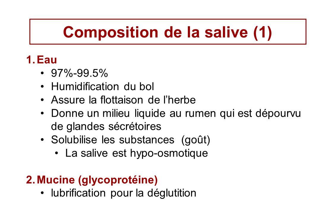 Composition de la salive (1) 1.Eau 97%-99.5% Humidification du bol Assure la flottaison de lherbe Donne un milieu liquide au rumen qui est dépourvu de