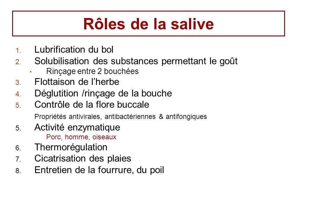 Rôles de la salive 1. Lubrification du bol 2. Solubilisation des substances permettant le goût Rinçage entre 2 bouchées 3. Flottaison de lherbe 4. Dég