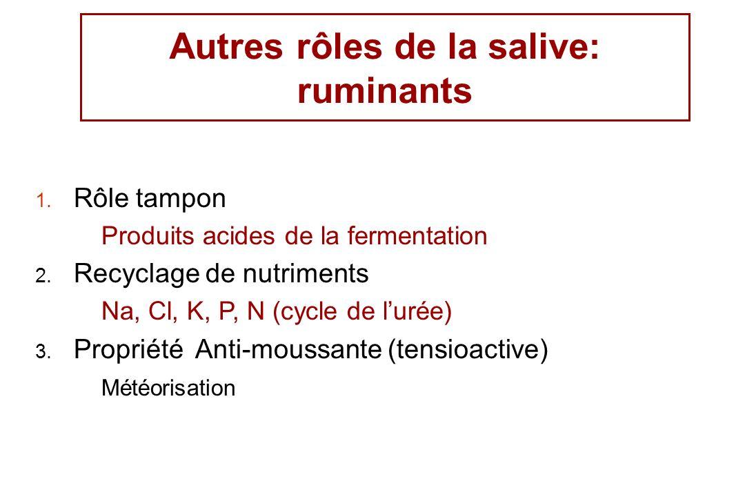 Autres rôles de la salive: ruminants 1. Rôle tampon Produits acides de la fermentation 2. Recyclage de nutriments Na, Cl, K, P, N (cycle de lurée) 3.