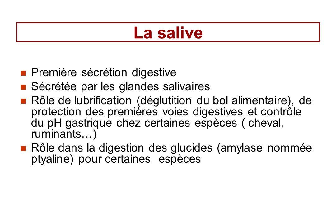 La salive Première sécrétion digestive Sécrétée par les glandes salivaires Rôle de lubrification (déglutition du bol alimentaire), de protection des p