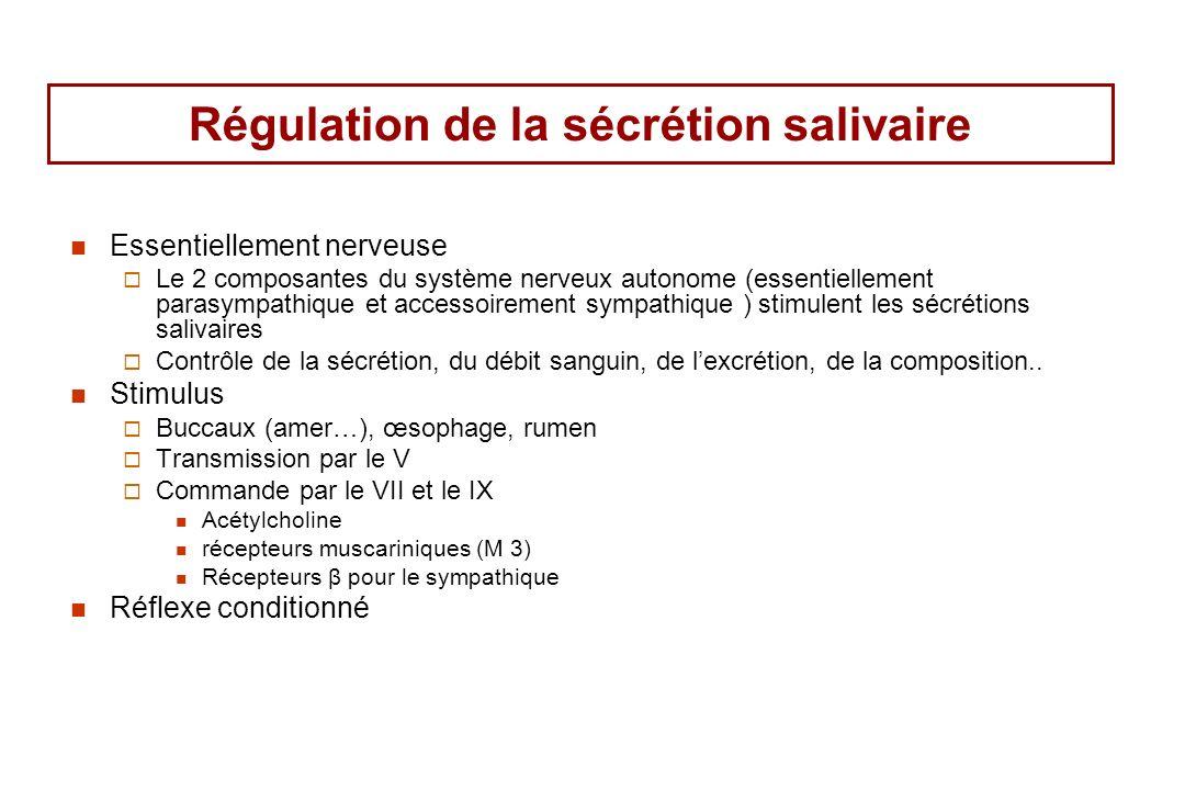 Régulation de la sécrétion salivaire Essentiellement nerveuse Le 2 composantes du système nerveux autonome (essentiellement parasympathique et accesso