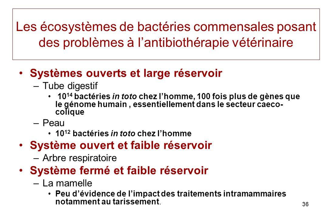 36 Les écosystèmes de bactéries commensales posant des problèmes à lantibiothérapie vétérinaire Systèmes ouverts et large réservoir –Tube digestif 10