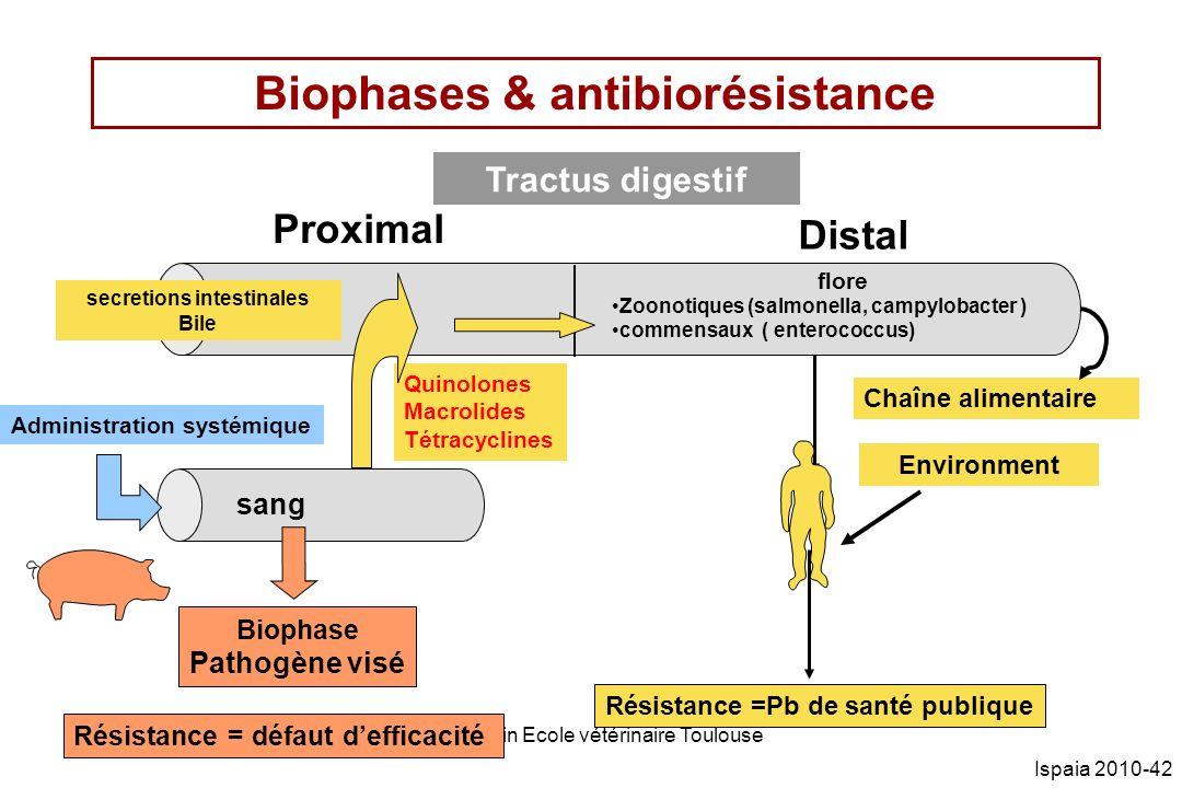 PL Toutain Ecole vétérinaire Toulouse Ispaia 2010-42 Biophases & antibiorésistance Tractus digestif Proximal Distal secretions intestinales Bile Résis