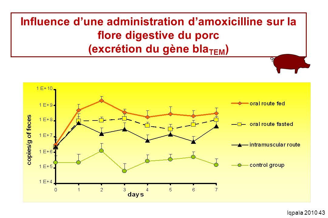 Iqpaïa 2010 43 Influence dune administration damoxicilline sur la flore digestive du porc (excrétion du gène bla TEM )