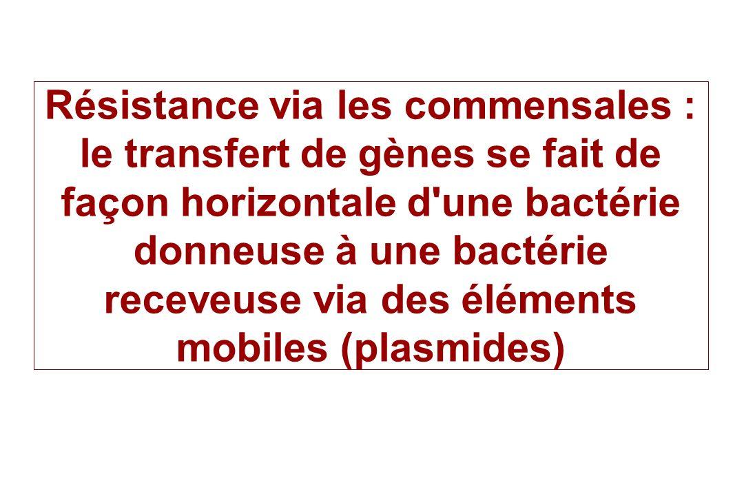 Résistance via les commensales : le transfert de gènes se fait de façon horizontale d'une bactérie donneuse à une bactérie receveuse via des éléments