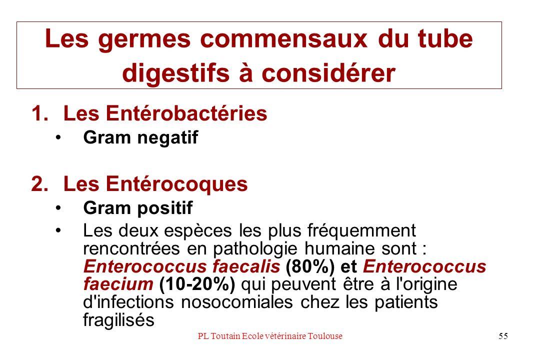 PL Toutain Ecole vétérinaire Toulouse55 Les germes commensaux du tube digestifs à considérer 1.Les Entérobactéries Gram negatif 2.Les Entérocoques Gra