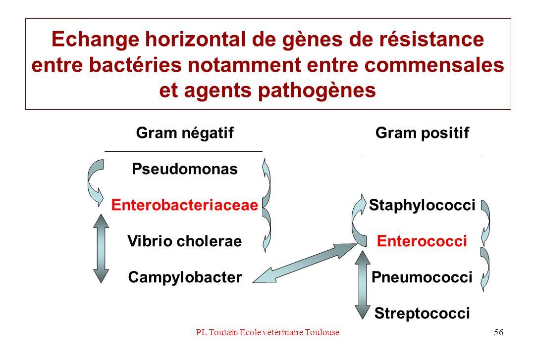 PL Toutain Ecole vétérinaire Toulouse56 Echange horizontal de gènes de résistance entre bactéries notamment entre commensales et agents pathogènes Gra