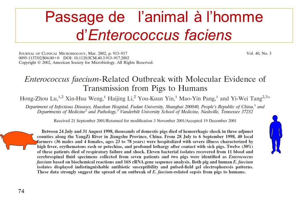 74 Passage de lanimal à lhomme dEnterococcus faciens