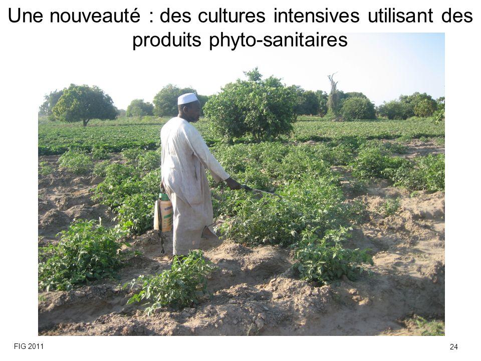 Une nouveauté : des cultures intensives utilisant des produits phyto-sanitaires FIG 2011 24
