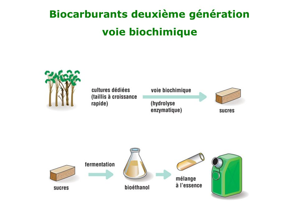 Biocarburants deuxième génération voie biochimique