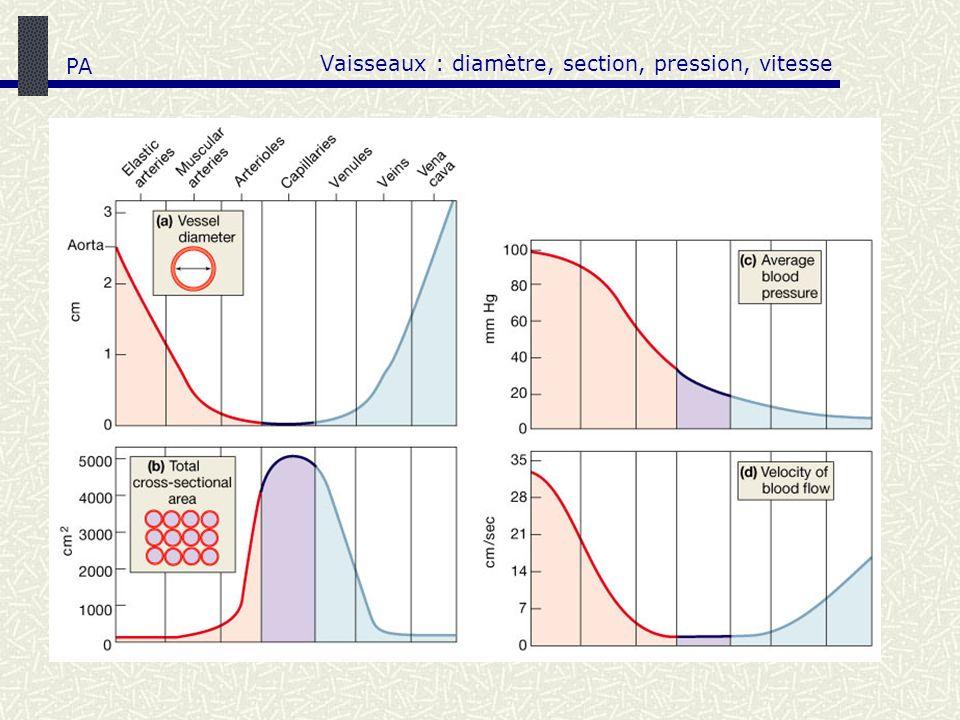 Vaisseaux : diamètre, section, pression, vitesse PA