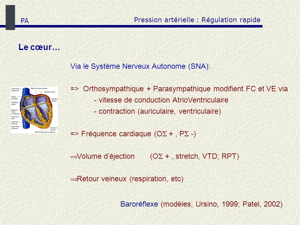 Le cœur… Pression artérielle : Régulation rapide Via le Système Nerveux Autonome (SNA): => Orthosympathique + Parasympathique modifient FC et VE via -