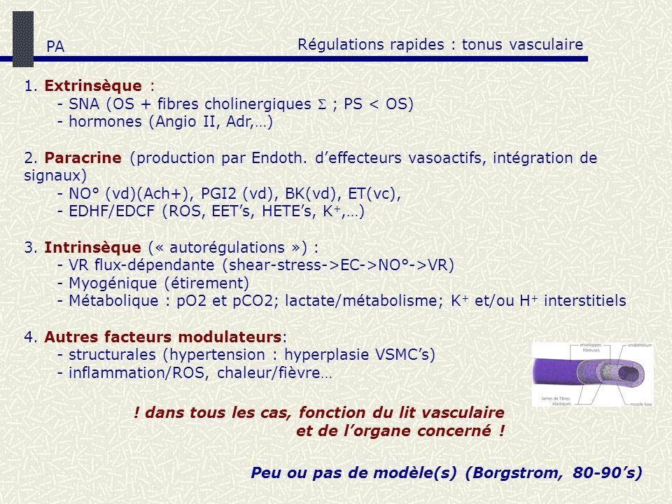 Régulations rapides : tonus vasculaire 1. Extrinsèque : - SNA (OS + fibres cholinergiques ; PS < OS) - hormones (Angio II, Adr,…) 2. Paracrine (produc