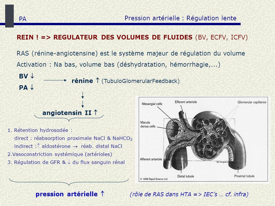 REIN ! => REGULATEUR DES VOLUMES DE FLUIDES (BV, ECFV, ICFV) Pression artérielle : Régulation lente BV RAS (rénine-angiotensine) est le système majeur