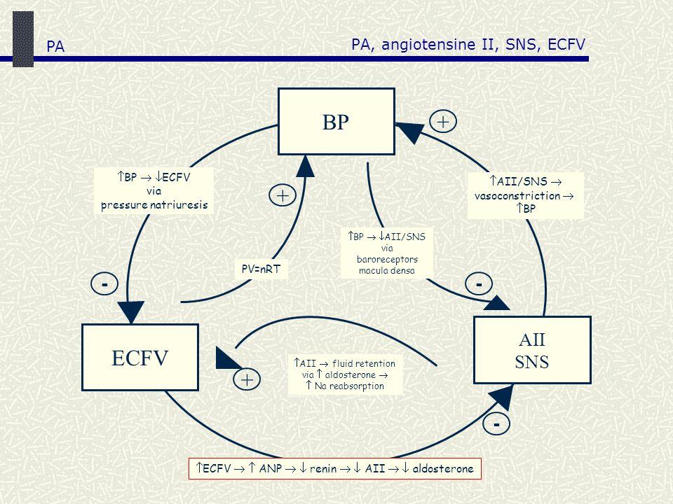 PA, angiotensine II, SNS, ECFV AII fluid retention via aldosterone Na reabsorption BP AII SNS ECFV + + + - - - BP ECFV via pressure natriuresis AII/SN