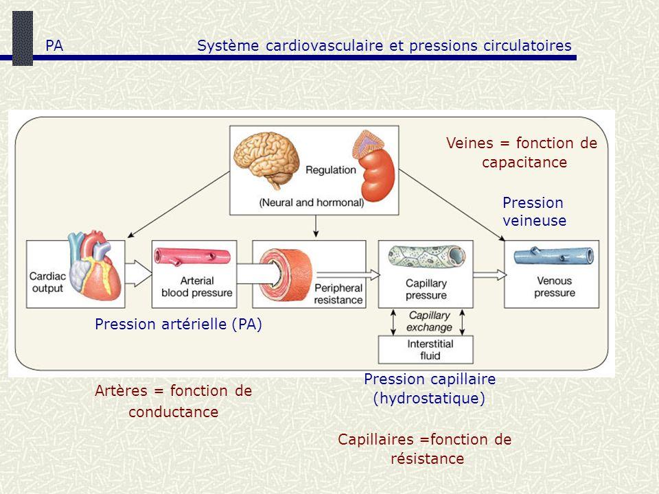 Artères = fonction de conductance Pression veineuse Pression capillaire (hydrostatique) Système cardiovasculaire et pressions circulatoires Pression a