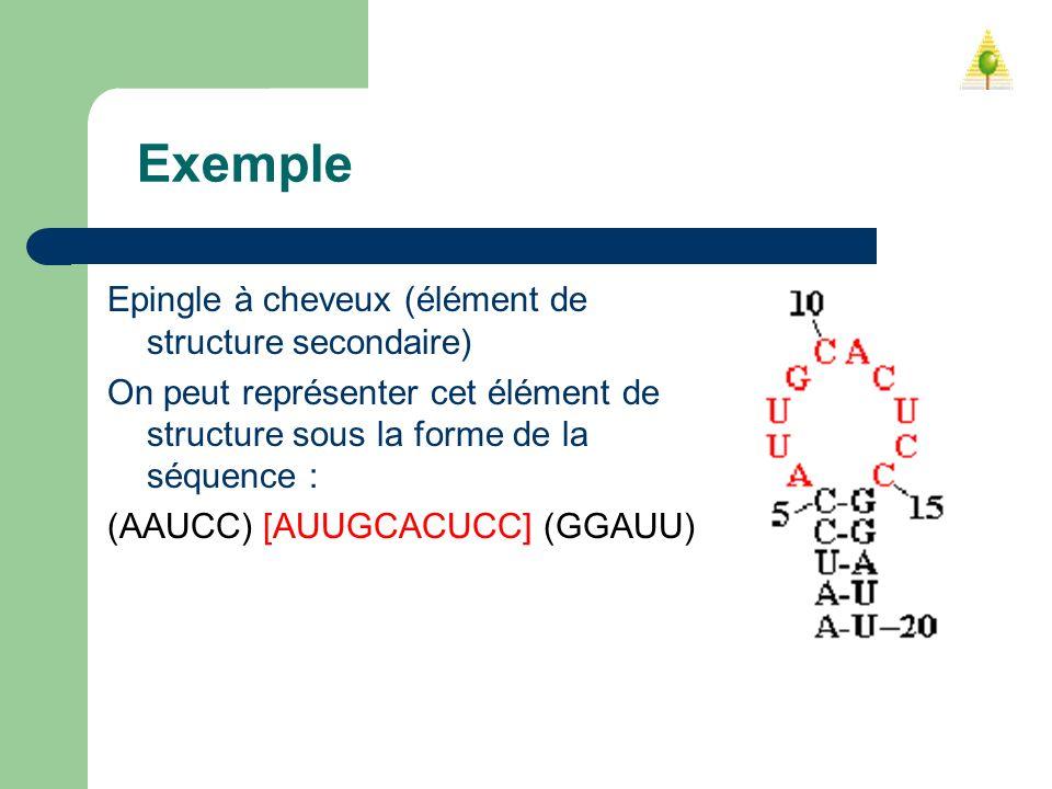 Exemple Epingle à cheveux (élément de structure secondaire) On peut représenter cet élément de structure sous la forme de la séquence : (AAUCC) [AUUGC