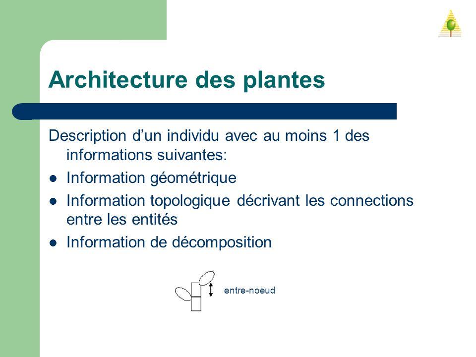 Architecture des plantes Description dun individu avec au moins 1 des informations suivantes: Information géométrique Information topologique décrivan