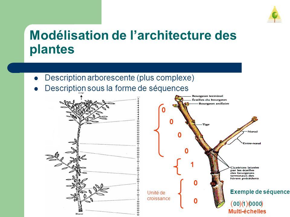 Unité de croissance Modélisation de larchitecture des plantes Description arborescente (plus complexe) Description sous la forme de séquences Exemple