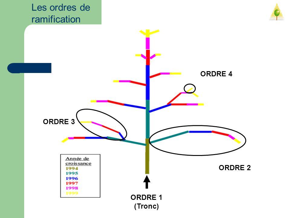 Les ordres de ramification ORDRE 1 (Tronc) ORDRE 2 ORDRE 3 ORDRE 4