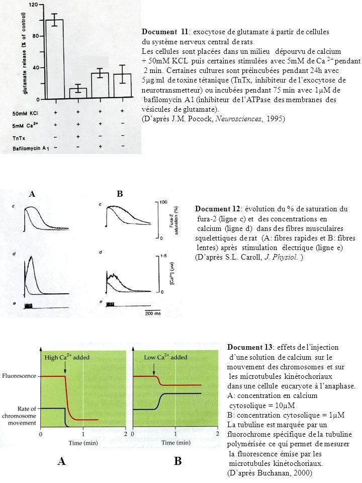 Document 11: exocytose de glutamate à partir de cellules du système nerveux central de rats. Les cellules sont placées dans un milieu dépourvu de calc