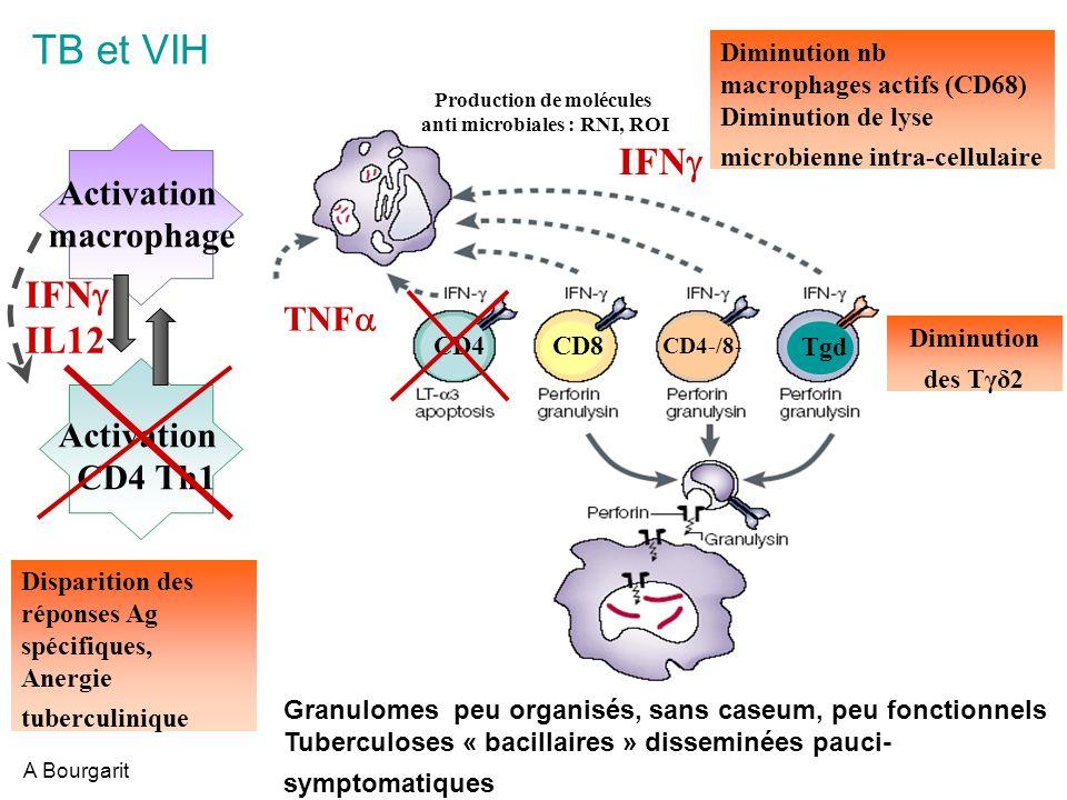 Mécanismes déchappement de Mtb Production de molécules anti microbiales : RNI, ROI Activation macrophage Activation CD4 Th1 IFN IL12 IFN CD4 CD4-/8- CD8 Tgd TNF Lyse des m infectés Interférence BK présent° cl II ECHAPPEMENT .