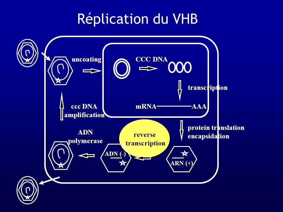 Immuno-restauration induite par HAART Seronconversion Anti HBe et Anti HBs avec/sans rebond de transaminases Cas rapportés : 4 études avec 9 cas Incidence : 1 sur 24 dans une étude prospectiveSeronconversion Anti HBe et Anti HBs avec/sans rebond de transaminases Cas rapportés : 4 études avec 9 cas Incidence : 1 sur 24 dans une étude prospective Rebond de lactivité nécrotico-inflammatoire sans séroconversion Cas rapportés : 4 études avec 7 cas Rebond de lactivité nécrotico-inflammatoire sans séroconversion Cas rapportés : 4 études avec 7 cas Carr, Lancet 1997 ; Velasco, NEJM 1999 ; Rouanet, Eur J Gastro 2003 ; Lascar, JID 2003 ; Piroth, J Hepatol 2000 ; Mastroianni, AIDS 1998 Proia, Am J Med 2000 ; Manegold, JID 2001 ; Drake, CID 2004
